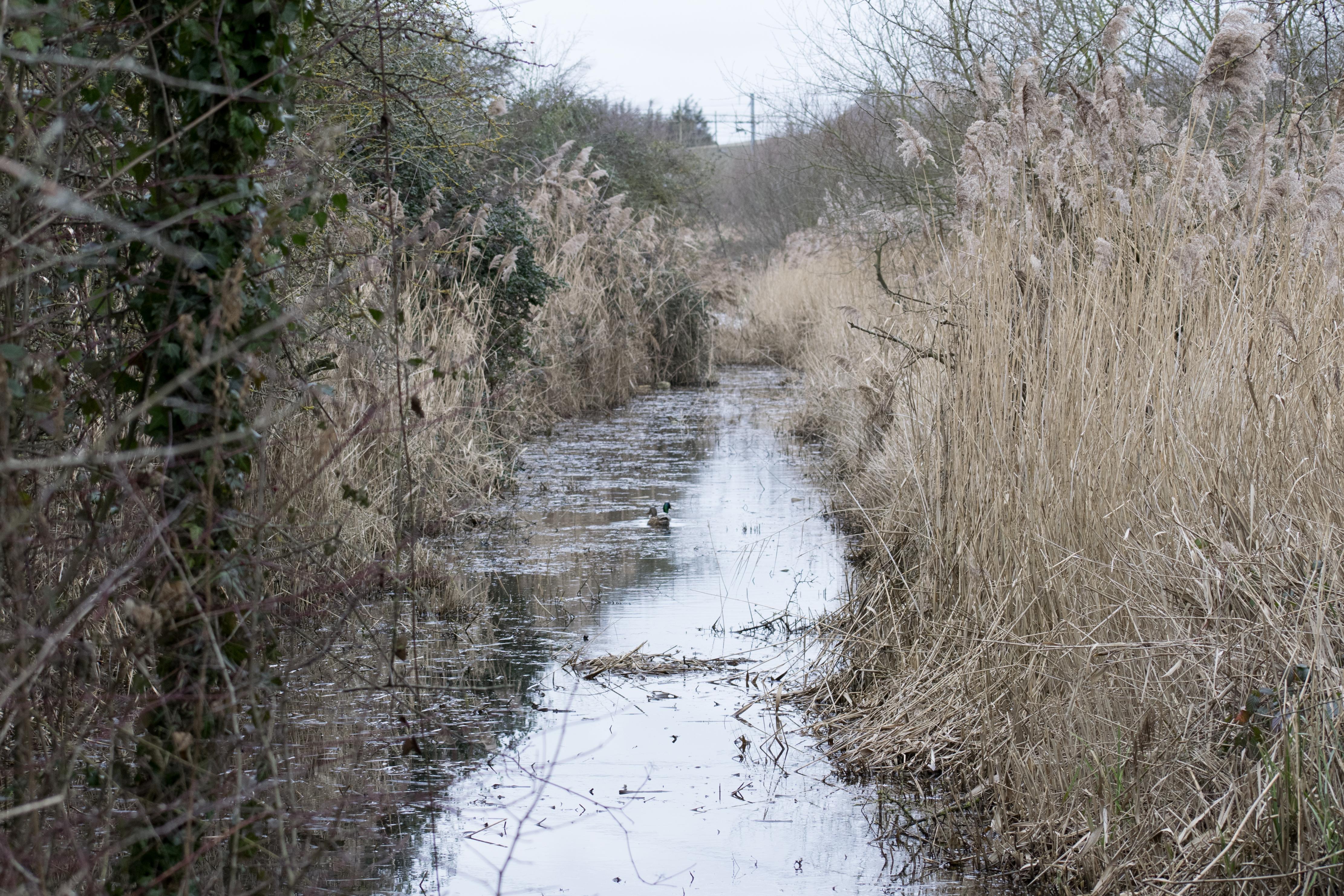 Rainham Marshes Reedbeds
